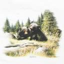 T-shirt - 2 Bears